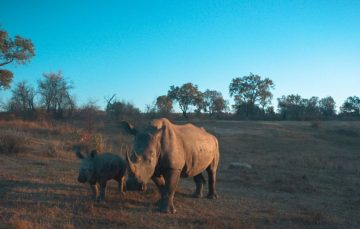 MTN And IBM IoT Technology Plan to Save The Planet One Rhino At A Time