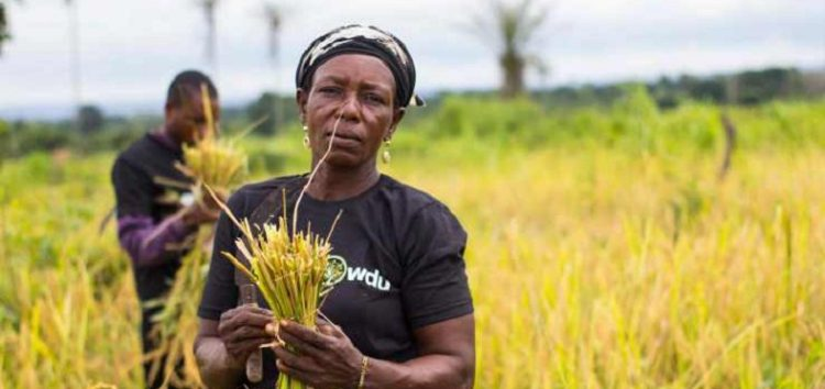 Farmcrowdy Gets $325,000 Funding from GSMA Ecosystem Accelerator Innovation Fund