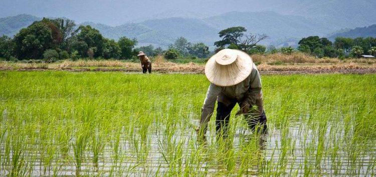 Alosfarm Begins Tests for Datafarm, a New Big Data Platform for Nigerian Farmers