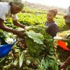 Nigerian Agritech Startup, ReelFruit Emerges Winner of $50,000 Funding From Village Capital Accelerator