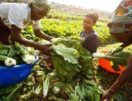 Nigerian Agritech Startup, ReelFruit Emerges Winner of $50,000 Funding From Village Capital Accelerator