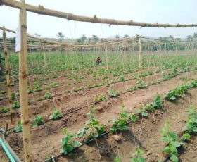 EZ Farming Secures $150,000 Seed Funding; Joins Farmcrowdy in Race to Lead Nigeria's Agricultural Renaissance