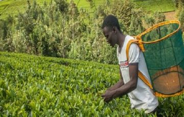 Wefarm Raises $13 Million Series A Funding to Expand Digital Marketplace for Small-scale Farmers in Africa