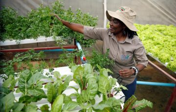 Fresh Direct Makes Landless Farming Possible and Appealing for City Dwellers