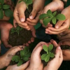 World Environment Day; 10 top and upcoming green tech companies in Nigeria